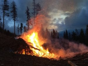 Wildfire Risk Reduction